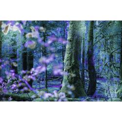 Forêt A - Micky Clément
