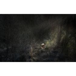 Uncertain Fates - Untitled...